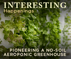 Aeroponic Greenhouse